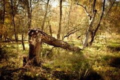Arbre tombé dans la forêt image stock