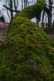 Arbre tombé dans la forêt au jour pluvieux Une mousse sur l'arbre tombé photo libre de droits
