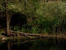 Arbre tombé dans la rivière photos libres de droits