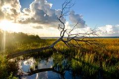Arbre tombé dans la terre de marais de la baie de Galveston au lever de soleil Images libres de droits