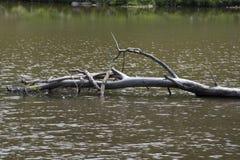 Arbre tombé dans le lac images stock