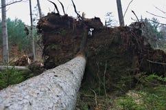 Arbre tombé dans les bois photographie stock