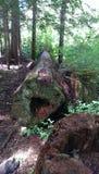 Arbre tombé dans les bois de l'Orégon photographie stock