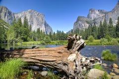 Arbre tombé dans Yosemite images libres de droits