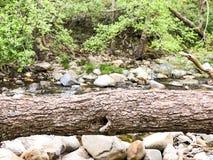 Arbre tombé en rivière images stock