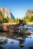 Arbre tombé en rivière de Merced Images libres de droits