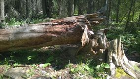 Arbre tombé par banff de traînée de Fenlands Photos stock