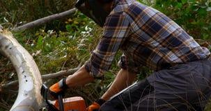 Arbre tombé par coupe de bûcheron dans la forêt 4k banque de vidéos