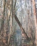 Arbre tombé soutenu par d'autres arbres Image stock
