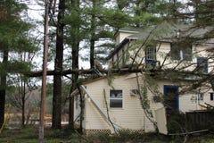 Arbre tombé sur le toit Image libre de droits