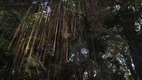 Arbre tropical clips vidéos