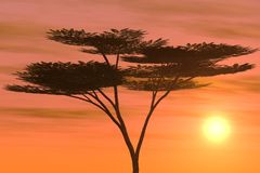 Arbre tropical au coucher du soleil Photo stock