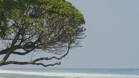 Arbre tropical par l'océan banque de vidéos