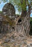 Arbre tropical sur le temple de som de ventres au complexe d'Angkor Images stock
