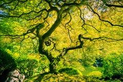 Arbre vert étonnant Images libres de droits