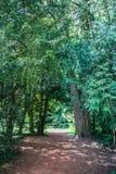 Arbre vert étonnant dans le schoenenwerd bally de parc Photos stock