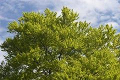 Arbre vert Photographie stock libre de droits