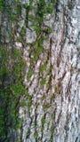Arbre vert Photo libre de droits