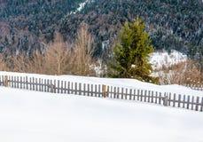 Arbre vert dans le premier plan Mountain View d'hiver à l'aube Photo stock