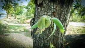 Arbre vert de branche de brun de feuille Photos libres de droits