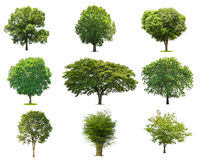 arbre vert de collections d'isolement arbre vert d'isolement sur le Ba blanc Photographie stock libre de droits