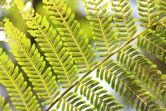 Arbre vert de feuille frais images stock