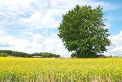 Arbre vert en pré de jaune d'été. Image libre de droits