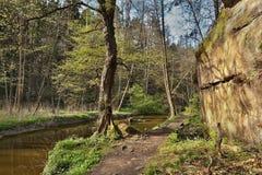 Arbre vert en vallée de Peklo avec la crique de potok de Robecsky et grande roche dans le kraj de Machuv de secteur de touristes Images libres de droits