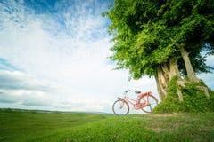 Arbre vert et bicyclette rouge Images stock