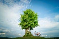 Arbre vert et bicyclette rouge Image stock