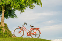 Arbre vert et bicyclette rouge Image libre de droits