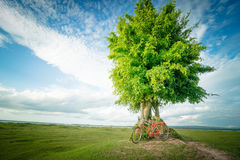 Arbre vert et bicyclette rouge Photographie stock libre de droits