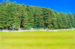 Arbre vert et herbe verte en parc public avec le ciel bleu-clair photo stock