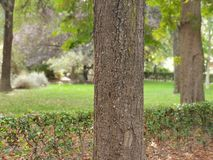 Arbre vert gentil à Madrid photo stock