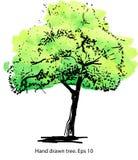 Arbre vert Illustration artistique tirée par la main élégante pour la conception, le textile et la copie Photos libres de droits