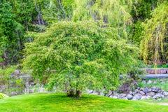 Arbre vert - journée de printemps images stock