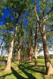 Arbre vert sur le cordon d'herbe Image libre de droits