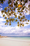 Arbre vert sur une plage blanche de sable Photo libre de droits