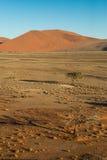 Arbre vu de la dune 45 Photographie stock