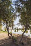 Arbres à côté d'un étang en parc rural Photographie stock