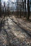 Arbres à feuilles caduques dans le contre-jour Photographie stock libre de droits