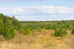 Arbres à feuilles caduques de paysage d'automne Apogée, écosystème stable, pureté de nature, région de Soumi, Ukraine, secteur ne images libres de droits