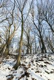 Arbres à feuilles caduques en hiver Photo libre de droits