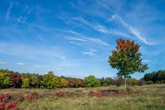 Arbres à l'automne photo stock