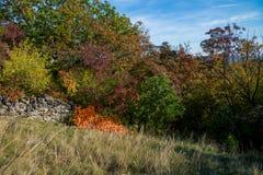 Arbres à l'automne image stock