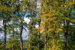 Arbres à l'automne photographie stock libre de droits
