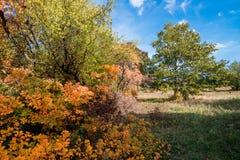 Arbres à l'automne photos stock