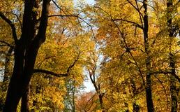 Arbres à l'automne images stock