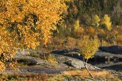 Arbres à l'automne Photographie stock