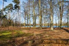 Arbres à un étang naturel dans une réserve naturelle belge image stock